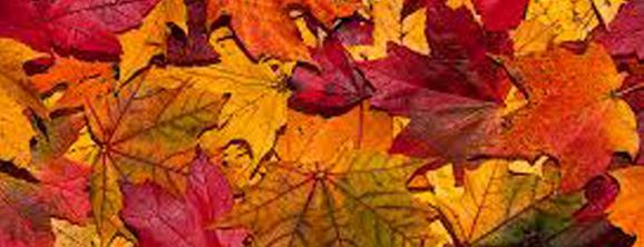 autumn-special