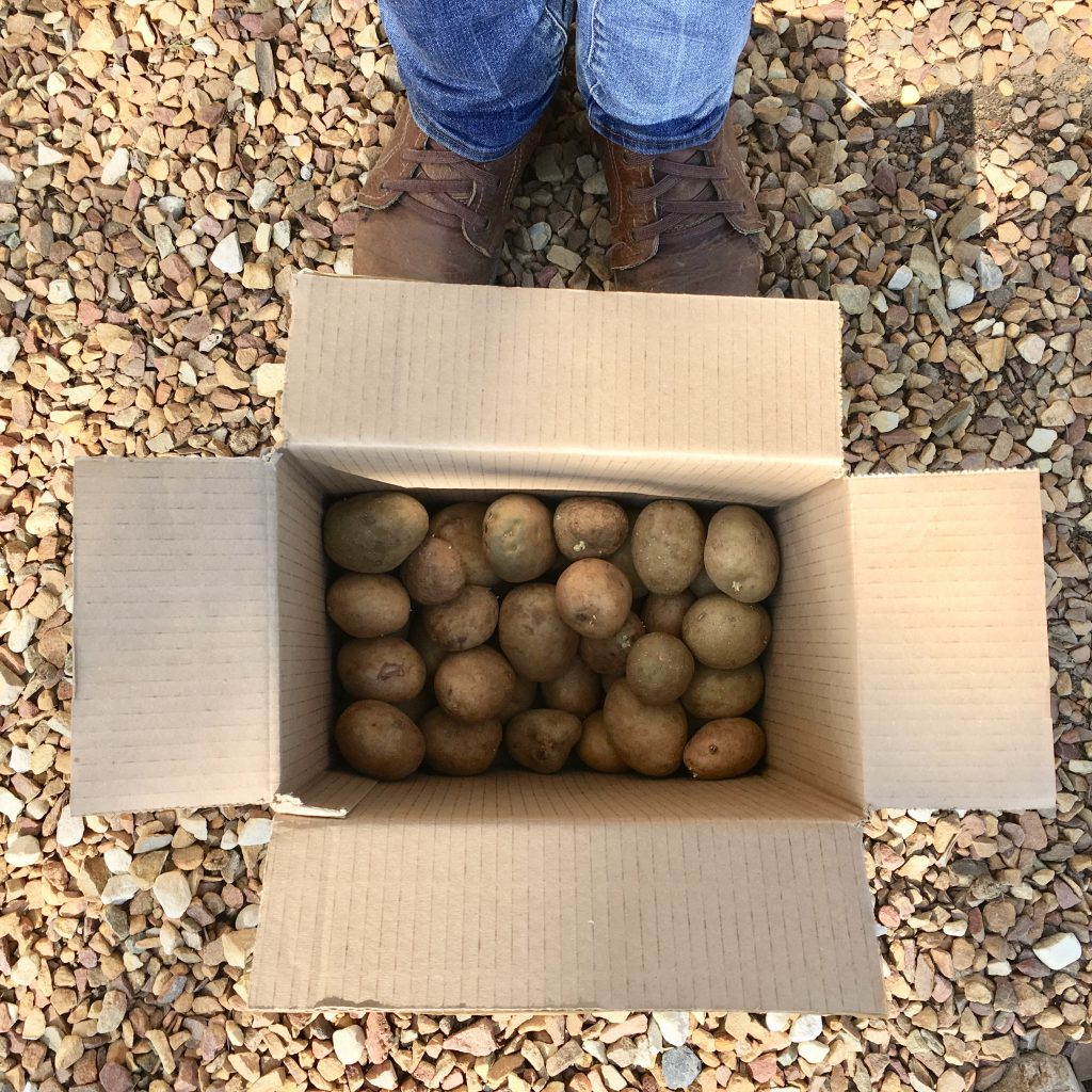 Potatoes arrived by courier from Livingseeds