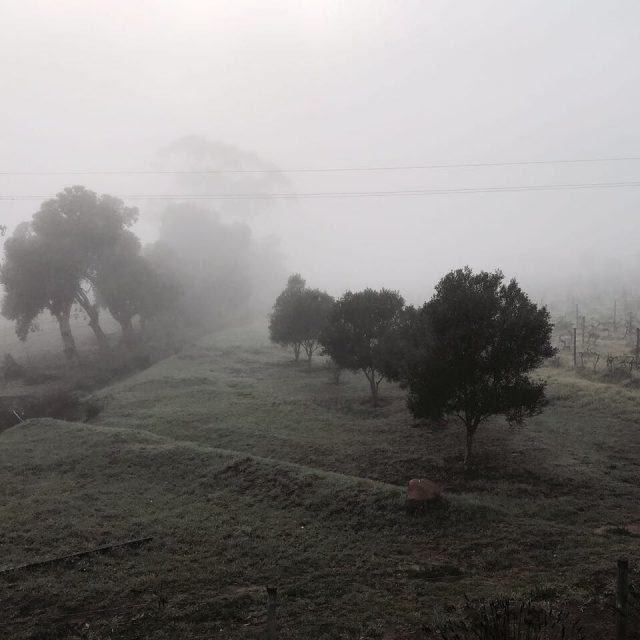 Magical misty mornings rozendal guestfarm wintermornings