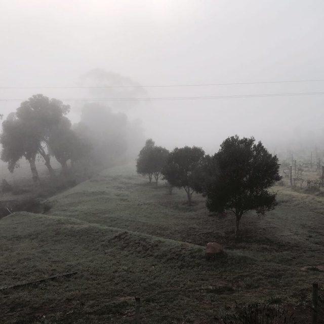 Magical misty mornings rozendal guestfarm wintermornings