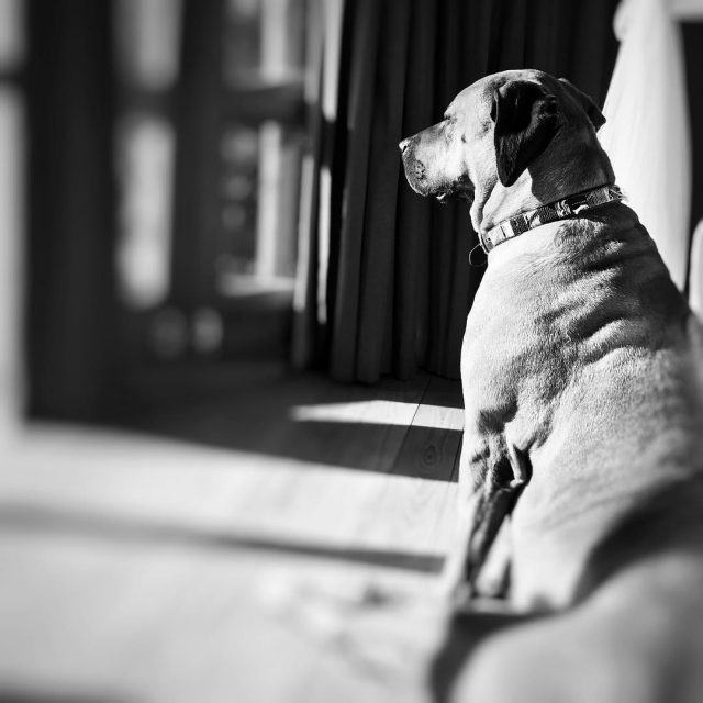 Basking in this mornings warm sun this hound knows whathellip