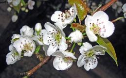 Rozendal Spring Fever