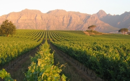 Our 5 Favourite Wine Farms in South Africa